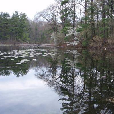 Pinehurst Lake Conservation Area near the Grand River