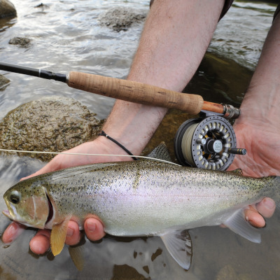 Steelhead fly fishing on the Grand River near Toronto, Waterloo and London