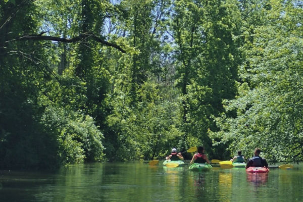 Guided kayak trips on Big Creek near Long Point